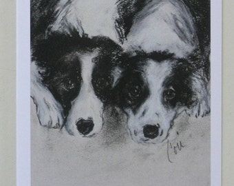 Two Border Collies Dog Art Note Cards By Cori Solomon