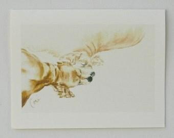 Cocker Spaniel Dog Art Note Cards By Cori Solomon