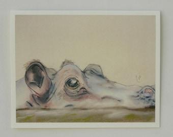 Hippopotamus Wildlife Art Note Cards By Cori Solomon
