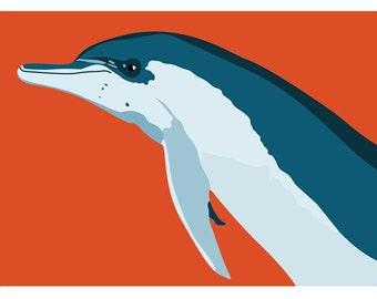 Dolphin print, 12.5 x 9