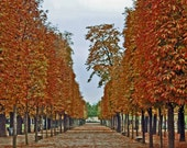 Jardin des Tuileries, 2010