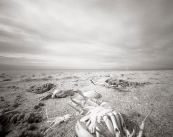 carb seascape pinhole black and white photograph