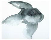 Blackie- black rabbit Art