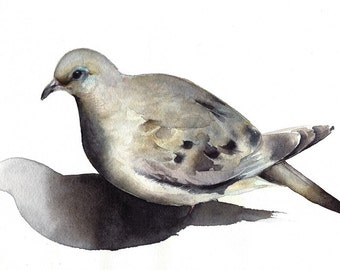 Mourning Dove- bird watercolor-Archival print -watercolor painting print