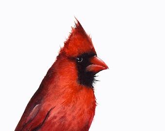 Cardinal watercolor, print of watercolor painting- bird watercolor,cardinal painting, bird art, nature