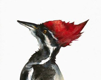 Pileated Woodpecker watercolor painting-Archival print- Woodpecker art