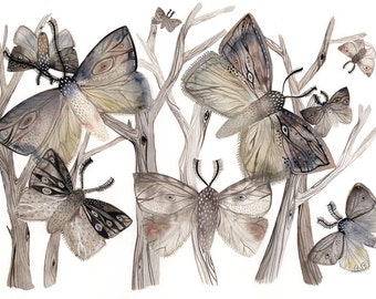 watercolor painting- Moth Watercolor Print- Moths  No. 1 - large print, grey, autumn, earth tones, pattern