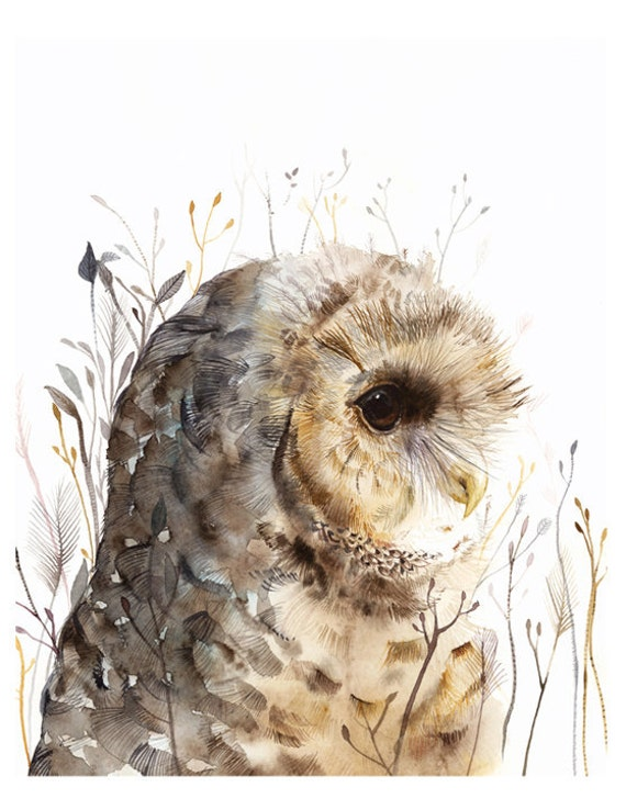 Owl watercolor art Spotted Owl print after original