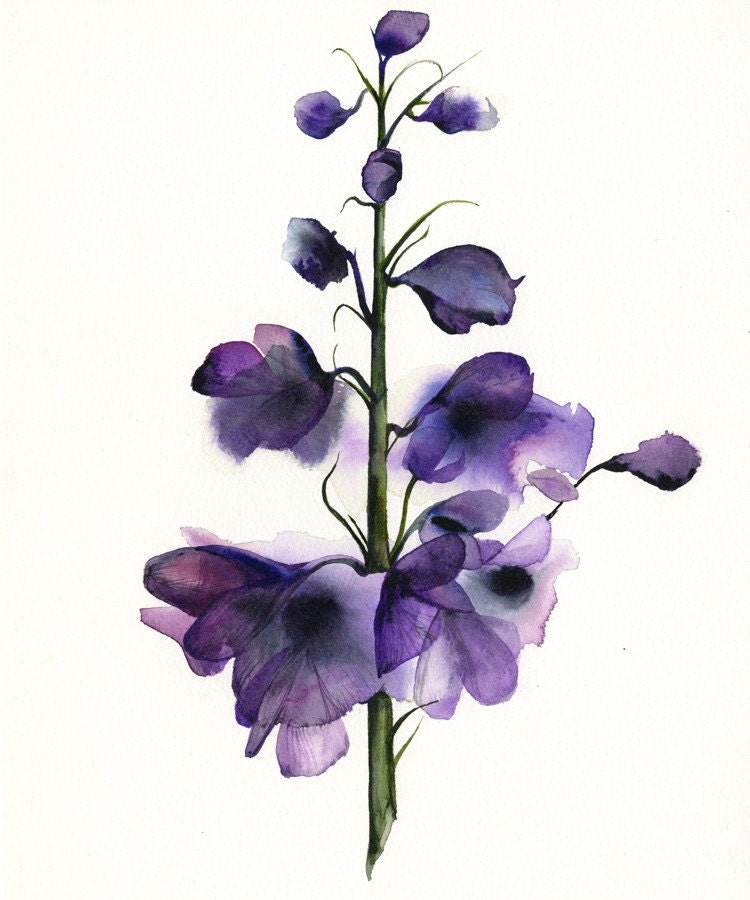 delphinium botanical print watercolor botanical watercolor