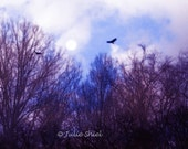 Collage of sky and trees, Moon, birds in flight Purple, Blue Home decor Dreams of Flying - 8x8 Art Photography, Surreal, Dreamy