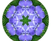 Blue Iris Photographic Mandala