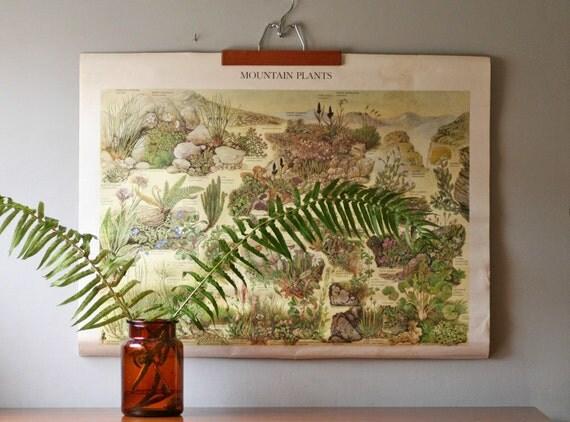 vintage oversized botanical poster - Mountain Plants