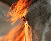 Filly Aflame - 2 x 2 Magnet