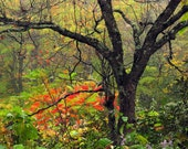 Fall Colors Photography Blue Ridge Parkway Art Lush landscape Autumn colors Rustic Home Decor Landscape Wall Art 5x7, 8x10, Matted  In Stock