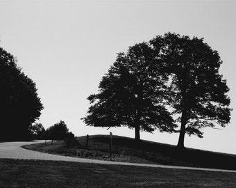 Tree Photos. NC mountain art. Rustic home decor. Blue Ridge Parkway landscape prints. Black & White wall art. home decor, Matted photos