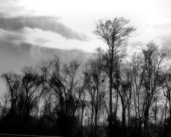 Tree Photography, Wispy Tree Print, Landscape photos, nature photography wall art. Black & White Home Decor 11x14, 8x10 matted to 11x14