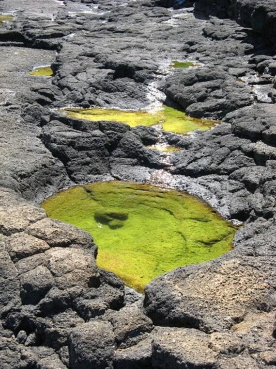 Lava Rock Photograph Queen's Bath Kauai Photography Grey Green Decor. Nature photo Abstract wall art print. 6x9 Fine Art Photograph In Stock