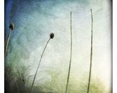 Eblouie 2 (Nature Photography - Fine Art Print - Landscape - Country - Winter - Ice - Frozen twigs  - Macro - Minimalist - Blue Green)