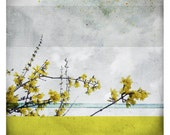 Ben Printemps (Nature Photography - Fine Art Print - Branch -  Flowers - Blossom -  Botanical - Country - Spring - Painting - Yellow - Blue)