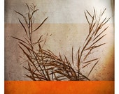 Ben automne (Nature Photography - Fine Art Print - Still Life - Branch - Monochromatic - Wall Art   - Painting - Orange - Fire)