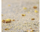 Mi (Abstract Photography - Fine Art Print - Nature-  Macro -Still Life - Floor - Sand - Beige - Yellow)
