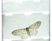 Papillon (Animals Photography - Fine Art Print - Butterfly - Macro  - Light - Minimalist  - Monochromatic - Wall Art  - Black and white)