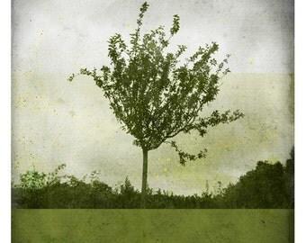 Ben Verdure (Nature Photography - Fine Art Print - Apple Tree - Country - Spring - paints - Dark Green)