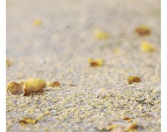Mi (Abstract Photography - Fine Art Print - Nature-  Macro -Still Life - Floor - Sand - Beige - Yellow)
