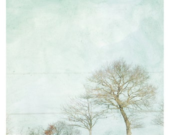 Neige (Landscape Photography - Fine Art Print - Trees - Country - Winter - Cold -  Minimal Wall Art - White)