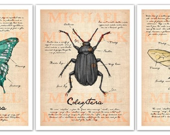 Field Journal illustrations - 3 pack 11x14