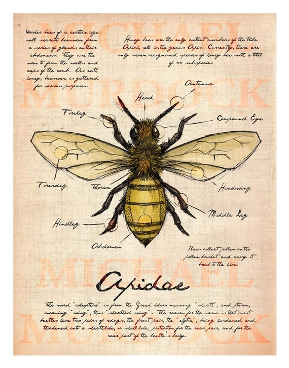 Bee Field Journal illustration 11x14