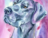 Blue Great Dane dog Brilliant Color Giclee Fine Art Print from my Watercolor Painting