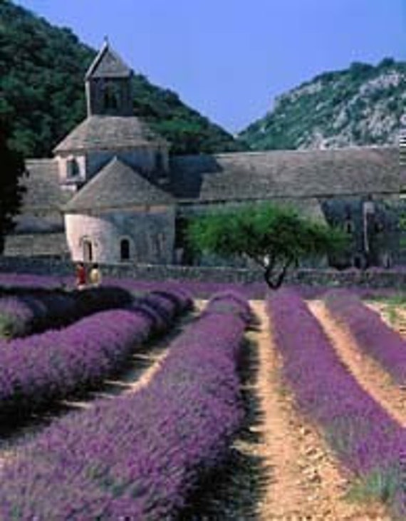 8 oz or 1/2 pound - Very Fine Quality French Lavender Buds from Provence