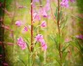 Pink Green Wild Flower Photograph--My Grandmother's Favorite Colors--Fine Art