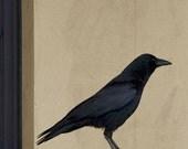 Biege Black Crow Photograph--Honorable Crow--Fine Art