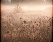 Pink Mauve Blue Meadow Fog Photograph--Foggy Meadow--Fine Art