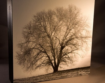 Black and White Photograph 8x8 Wood Panel--Lone Tree in Winter--Fine Art