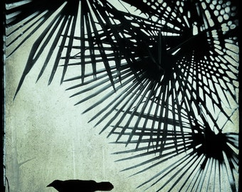 Crow with Palm 5x5 TTV Original Signed Fine Art Photograph