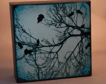 The Gathering of Crows 4x4 Fine Art Photograph on Wood Panel