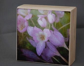 Purple Flower Photograph on Wood Panel--Morning Has Broken --4x4 Fine Art