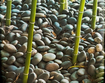 Green Grey Stones Bamboo Photograph--Rocks and Bamboo--Fine Art