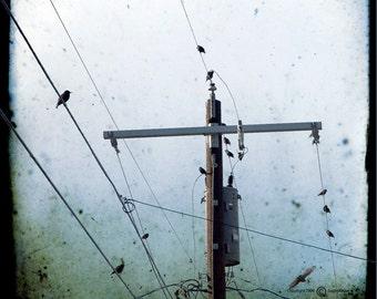 Birds on Wires Sky Photograph--Birds In the Hood --5x5 TTV Fine Art