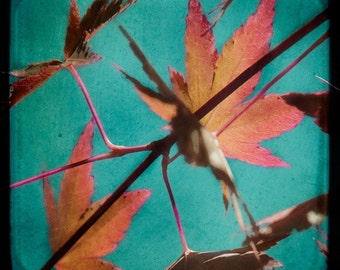 Autumn Leaves Turquoise Red Photograph--Change of Season--TTV Fine Art