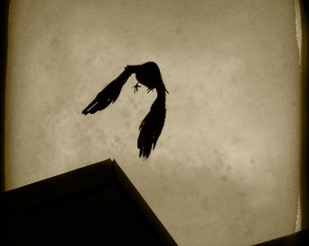 Sepia Crow Photograph--Crow over Rooftop--TTV Fine Art