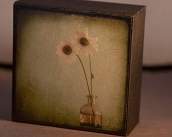 Green Daisy Photograph on Wood Panel---Friends--4x4 Fine Art