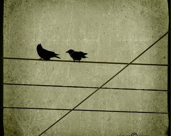 Green Crows Photograph--Crossing the Line--TTV Fine Art