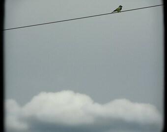 Bird Blue Sky Cloud Photograph--Above It All--TTV Fine Art