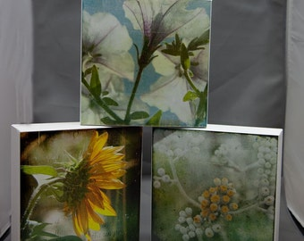 Set of Three Floral 6x6 Fine Art Photographs on Wood Panel
