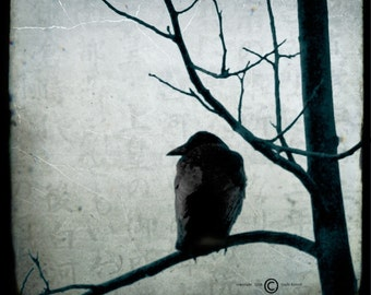 Blue Crow Tree Photograph--Black Crow Waiting--TTV Fine Art