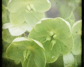 Chartreuse Floral Photograph--Chartreuse--TTV Fine Art